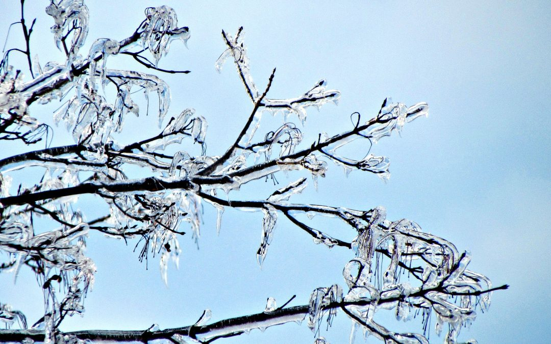 Are your trees ready for winter?
