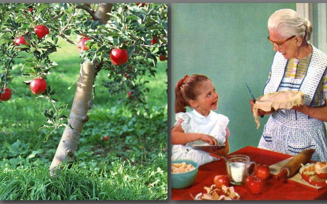 I Love My Tree Because I Love Grandma's Apple Pie