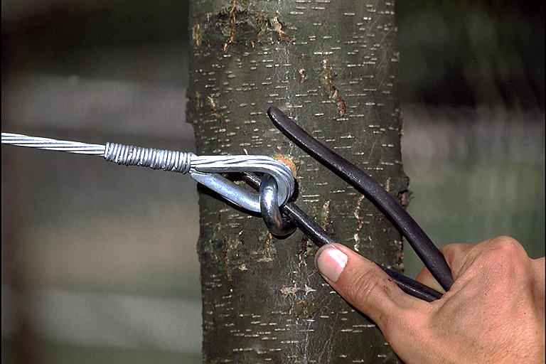 Prepare Your Trees For Harsh Weather
