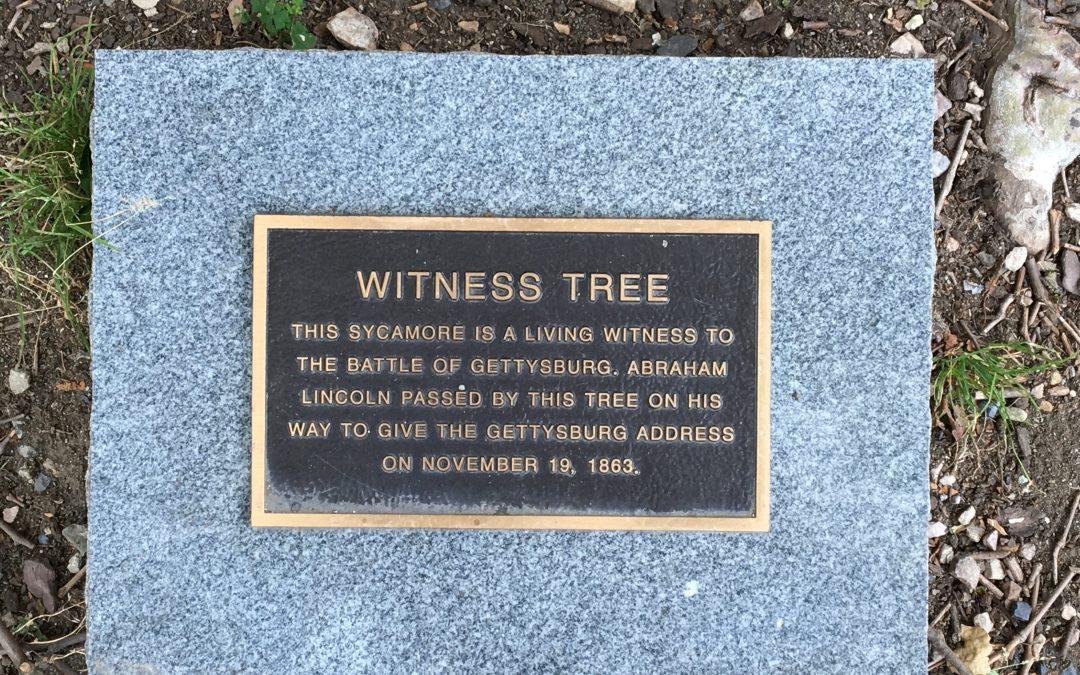 """Witness Tree"" Protection Program: Preserving Gettysburg's Living History"