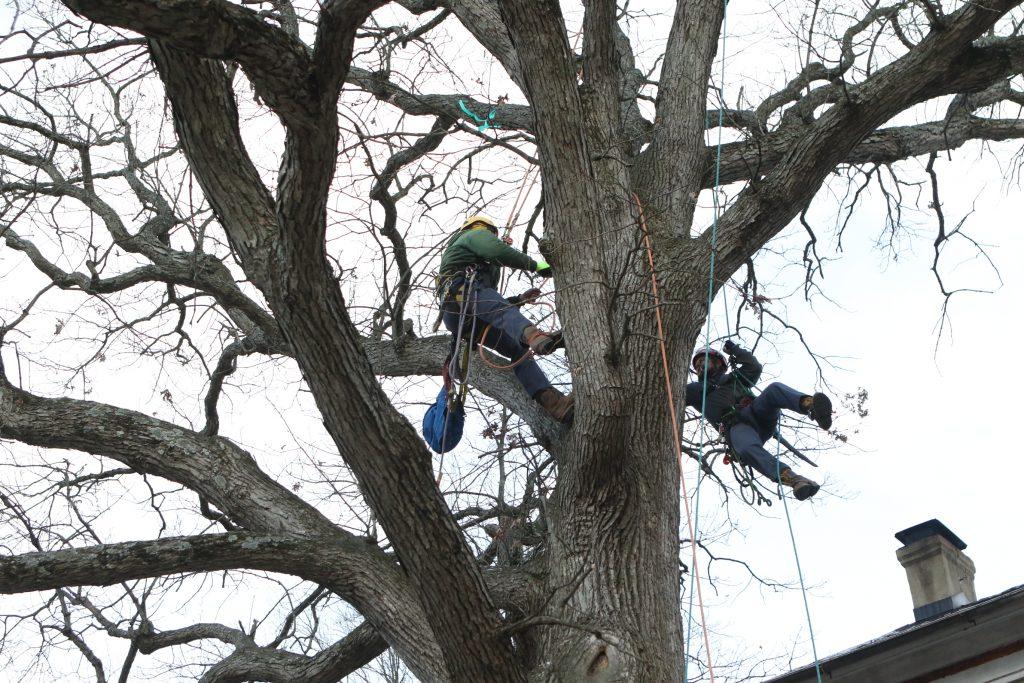 bids on tree work