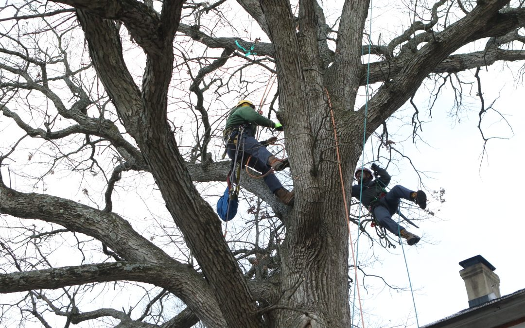 Four Things to Consider When Accepting Bids for Tree Work