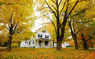 Fall Plant Health Care Guide: Horticultural Oil, Soil-Injected Fertilizations, Wooly Adelgid and More
