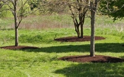 7 Ways to Get the Most Out of Your Mulch This Season