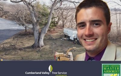 The Authority in Tree Care: Evan Brumfield, ISA Board Certified Master Arborist