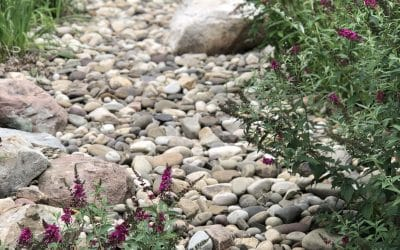 Adding a Raingarden: An Appealing and Practical Solution to Excess Water