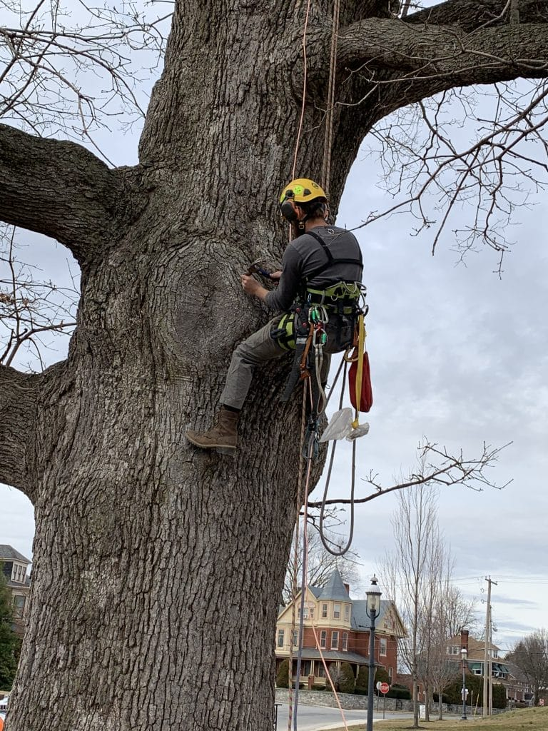 Cumberland Valley Tree Service