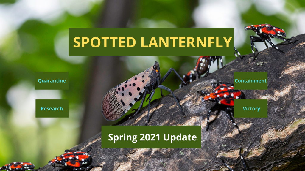 spotted lanternfly quarantine